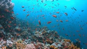 Arrecife de coral con los pescados de la abundancia Fotos de archivo libres de regalías