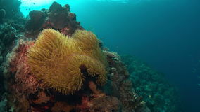Arrecife de coral con los pescados de la abundancia almacen de metraje de vídeo