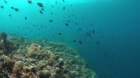 Arrecife de coral con los pescados de la abundancia almacen de video