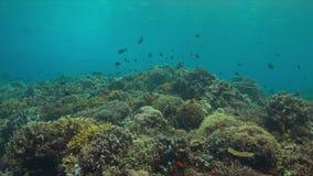 Arrecife de coral con los pescados 4k de la abundancia almacen de video