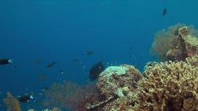 Arrecife de coral con los pescados 4k de la abundancia almacen de metraje de vídeo