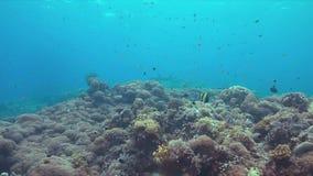 Arrecife de coral con los pescados 4k de la abundancia metrajes