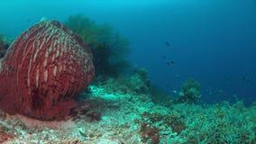 Arrecife de coral con un coral grande de la esponja metrajes