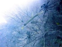Arrecife de coral de Gorgonia y pescados de la trompeta Fotografía de archivo libre de regalías