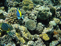 Arrecife de coral de Maldivas Fotografía de archivo libre de regalías