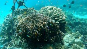 Arrecife de coral debajo del mar metrajes