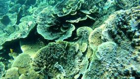 Arrecife de coral debajo del mar almacen de metraje de vídeo