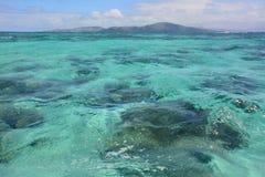 Arrecife de coral del mar imagenes de archivo