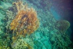 Arrecife de coral del Mar Rojo Fotos de archivo libres de regalías