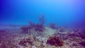 Arrecife de coral del paisaje marino con una fan de mar en las aguas del Playa del Carmen metrajes