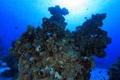 Arrecife de coral en el Mar Rojo Foto de archivo libre de regalías