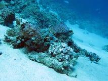 Arrecife de coral en la gran profundidad en el mar tropical en fondo del agua azul Imagen de archivo libre de regalías