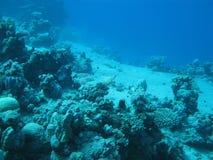 Arrecife de coral en la gran profundidad en el mar tropical en fondo del agua azul Imágenes de archivo libres de regalías