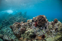 Arrecife de coral en Maui, Hawaii Fotos de archivo