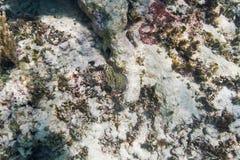 Arrecife de coral de muerte Fotografía de archivo libre de regalías