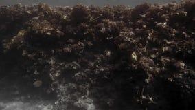 Arrecife de coral muerto en la parte inferior del Mar Rojo Tiroteo en el movimiento carro En el fondo nade algunos peque?os pesca almacen de metraje de vídeo