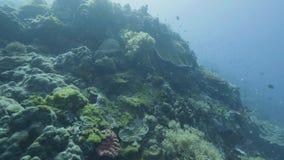 Arrecife de coral de Point of View y pescados que nadan mientras que salto del mar Buceo con escafandra en el mar almacen de metraje de vídeo