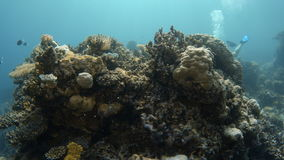 Arrecife de coral subacuático azul almacen de video