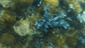 Arrecife de coral subacuático con los grupos de pescados metrajes
