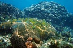 Arrecife de coral subacuático con los pescados en el mar del Caribe Imágenes de archivo libres de regalías