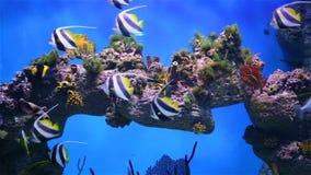 Arrecife de coral subacuático con los pescados tropicales en el océano metrajes