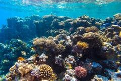 Arrecife de coral subacuático del Mar Rojo Imágenes de archivo libres de regalías