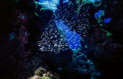 Arrecife de coral subacuático en cueva abierta Fotografía de archivo