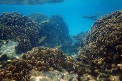 Arrecife de coral subacuático en el mar del Caribe Fotografía de archivo libre de regalías