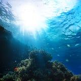 Arrecife de coral subacuático del Mar Rojo Foto de archivo libre de regalías