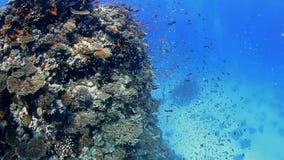 Arrecife de coral tropical con los bajíos de pescados metrajes
