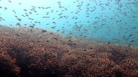 Arrecife de coral vivo con vida marina y bajíos de pescados almacen de metraje de vídeo