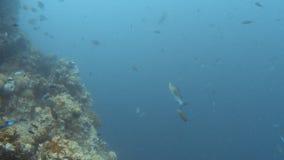 Arrecife de coral y grupos de pescados metrajes