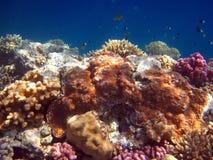 Arrecife de coral y pescados Imagen de archivo libre de regalías