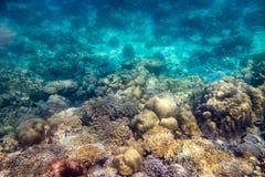 Arrecife de coral y pescados hermosos de la escuela en luz del sol Foto de archivo