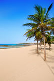 Arrecife Lanzarote Playa Reducto beach palm trees Royalty Free Stock Image