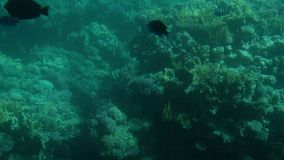 Arrecifes de coral con los pescados visión desde el submarino almacen de video