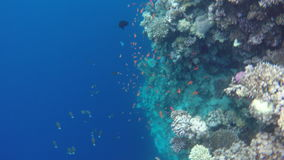 Arrecifes de coral, flora y fauna almacen de metraje de vídeo