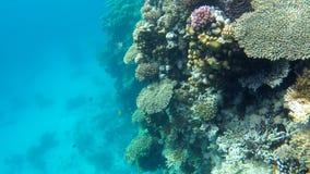 Arrecifes de coral subacuáticos del Mar Rojo almacen de video