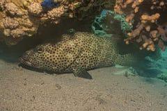 Arrecifes de coral y plantas de agua en el Mar Rojo