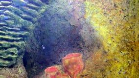 Arrecifes de coral y vida marina metrajes