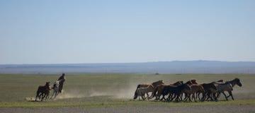 Arredondamento acima dos cavalos Imagens de Stock Royalty Free