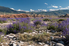 Arredores em Quirguizistão, montanhas do lago Issyk Kul de Tian Shan Imagens de Stock Royalty Free