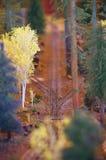 Arredores Railway Foto de Stock Royalty Free