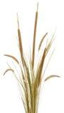 Arreglo 2 de la hierba Imagen de archivo libre de regalías