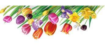 Arreglo con las flores multicoloras de los tulipanes libre illustration