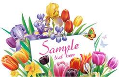 Arreglo con las flores multicoloras de los tulipanes ilustración del vector