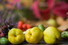 Arreglo con las frutas de la caída Imagen de archivo libre de regalías