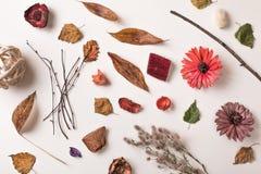 Arreglo creativo de diversas plantas secas Foto de archivo libre de regalías