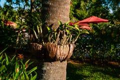 Arreglo creativo de macetas en árbol imagenes de archivo