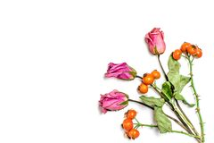 Arreglo creativo del modelo Composición del otoño hecha de hojas, de bayas del dogrose y de la flor secadas en el fondo blanco fotos de archivo libres de regalías